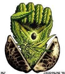 Seed power